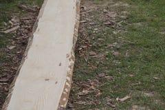 Primo piano della plancia di legno del pino senza buccia prima del processo d'abrasione Fotografie Stock Libere da Diritti