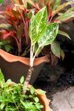 Primo piano della plantula verde nel giardino Fotografie Stock