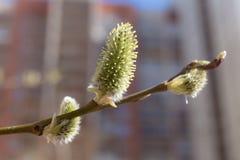 Primo piano della primavera Fotografia Stock Libera da Diritti