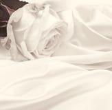 Primo piano della rosa di bianco come fondo Nella seppia tonificata Retro stile Fotografie Stock Libere da Diritti