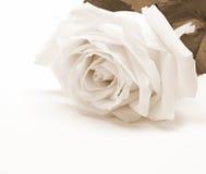 Primo piano della rosa di bianco come fondo Nella seppia tonificata Retro stile Immagini Stock