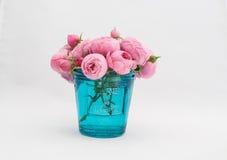 Primo piano della rosa di rosa (acni rosacee) Fotografia Stock Libera da Diritti
