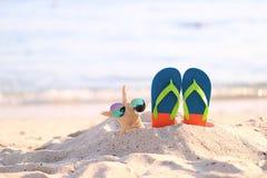 Primo piano della spiaggia di estate con i Flip-flop blu e degli occhiali da sole sulle stelle marine in spiaggia tropicale fotografie stock