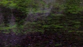 Primo piano della superficie del lago verde video d archivio