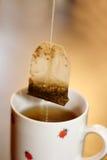 Primo piano della tazza di tè fotografia stock libera da diritti