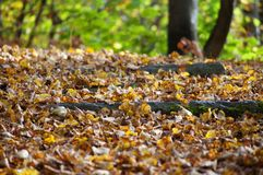 Primo piano della traccia di autunno Fotografie Stock Libere da Diritti
