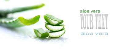 Primo piano della vera dell'aloe Cosmetici organici naturali affettati di rinnovamento di Aloevera, medicina alternativa Concetto Immagine Stock