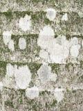 Primo piano delle alghe, del muschio e del lichene crescenti sul tronco di albero Fotografie Stock Libere da Diritti