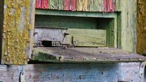Primo piano delle api che volano intorno all'alveare di legno colourful stock footage