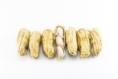 Primo piano delle arachidi Fotografia Stock Libera da Diritti