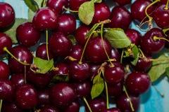 Primo piano delle ciliege mature con i gambi Ampia raccolta delle ciliege rosse fresche Priorità bassa matura delle ciliege Fotografia Stock Libera da Diritti