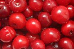 Primo piano delle ciliege mature rosse Fotografia Stock