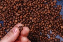 Primo piano delle dita che mostrano il chicco di caffè arrostito Fotografie Stock Libere da Diritti
