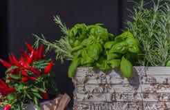 Primo piano delle erbe e del peperoncino rosso fotografia stock