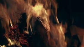 Primo piano delle fiamme durante il fuoco della prateria sudafricana stock footage