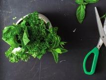 Primo piano delle foglie del basilico, della menta e del prezzemolo vicino ad un paio delle forbici di colore verde fotografia stock
