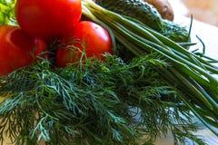 Primo piano delle foglie dell'insalata, dei pomodori e del ramo fresco dei cetrioli dell'aneto Immagini Stock