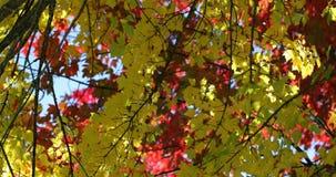 Primo piano delle foglie di autunno 4k video d archivio