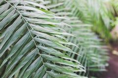 Primo piano delle foglie di palma immagine stock libera da diritti