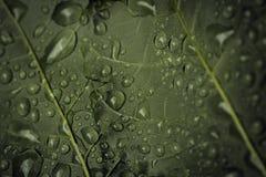 Primo piano delle gocce di pioggia su una foglia verde immagini stock libere da diritti