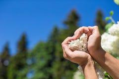 Primo piano delle mani che tengono il cuore della forma del fiore bianco Immagini Stock Libere da Diritti