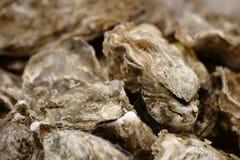 Primo piano delle ostriche Fotografia Stock
