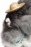 Primo piano delle perle da portare del coniglio inglese di angora immagini stock