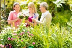 Primo piano delle piante di giardino alla serra Immagini Stock
