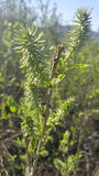 Primo piano delle piante verdi fotografia stock libera da diritti
