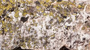 Primo piano delle rocce grige coperte di muschio, modello dei chip, crepe Grindelwald, Svizzera Immagini Stock Libere da Diritti
