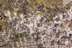 Primo piano delle rocce grige coperte di muschio, modello dei chip, crepe Grindelwald, Svizzera Immagini Stock