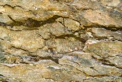 Primo piano delle rocce grige coperte di muschio, modello dei chip, crepe Grindelwald, Svizzera Immagine Stock Libera da Diritti