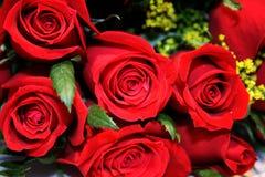 Primo piano delle rose immagini stock