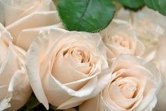 Primo piano delle rose bianche Fotografia Stock