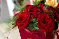 Primo piano delle rose del Bordeaux Mazzo delle rose di Borgogna in un contenitore di regalo rosso fotografia stock
