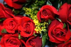 Primo piano delle rose di bellezza fotografia stock