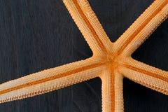 Primo piano delle stelle marine Fotografie Stock Libere da Diritti