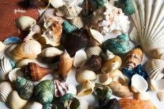 Primo piano delle stelle marine variopinte, crostacei, conchiglia Fotografia Stock