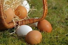 Primo piano delle uova dal canestro capovolto nel muschio immagine stock