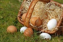 Primo piano delle uova dal canestro capovolto nel muschio fotografia stock