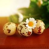 Primo piano delle uova dell'uccello di Pasqua Fotografia Stock Libera da Diritti