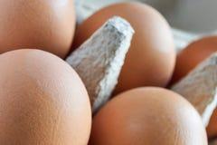 Primo piano delle uova marroni in un cartone grigio dell'uovo Fotografia Stock