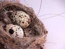 Primo piano delle uova in nido Immagini Stock Libere da Diritti
