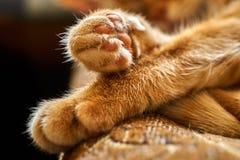Primo piano delle zampe attraversate di un gatto rosso dei peli di sonno Immagine Stock