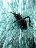 Primo piano dello scarabeo immagini stock