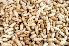Primo piano di alcune arachidi Fotografia Stock Libera da Diritti