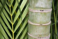 Primo piano di bambù Immagine Stock