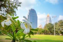Primo piano di bei fiori bianchi in parco sulle costruzioni e sul fondo vaghi del cielo blu fotografia stock libera da diritti