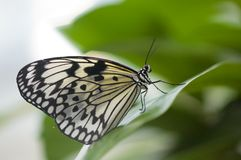 Primo piano di bella farfalla Fotografia Stock Libera da Diritti