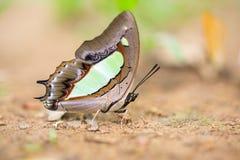 Primo piano di bella farfalla che riposa sulla terra Fotografia Stock
